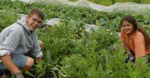 Solidarität zwischen den Betrieben der Solidarischen Landwirtschaft